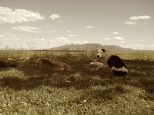 RGuillory azWINEdogs sepia 1Sep2014