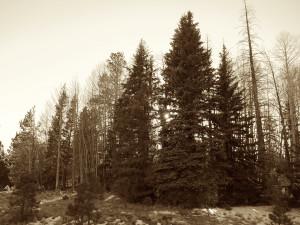 RRG601_Sepia Trees