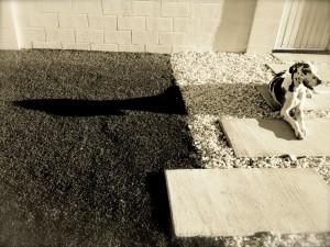 shadow callisto the great